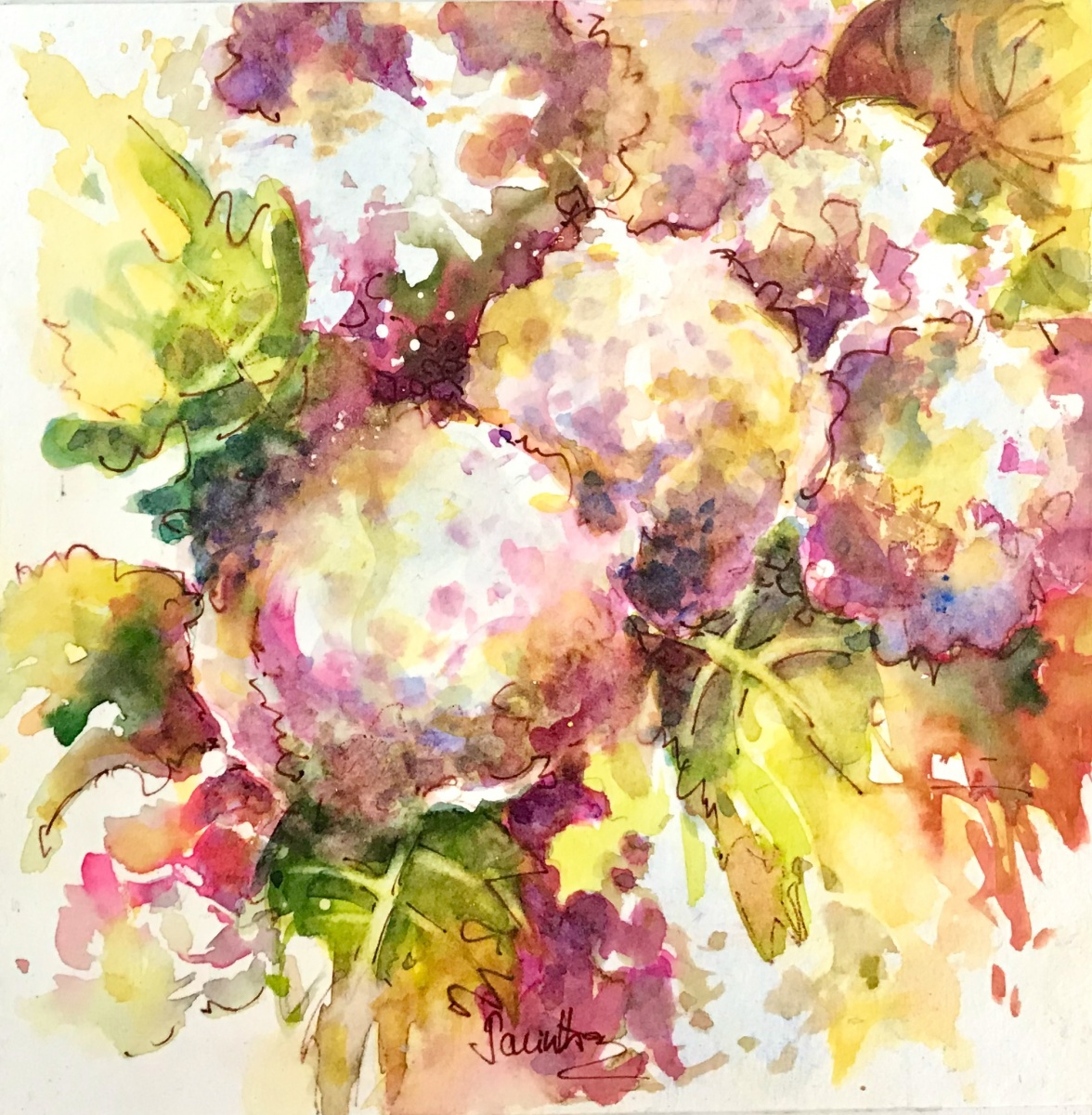 SOLD - ROSE TINTED HYDRANGEA