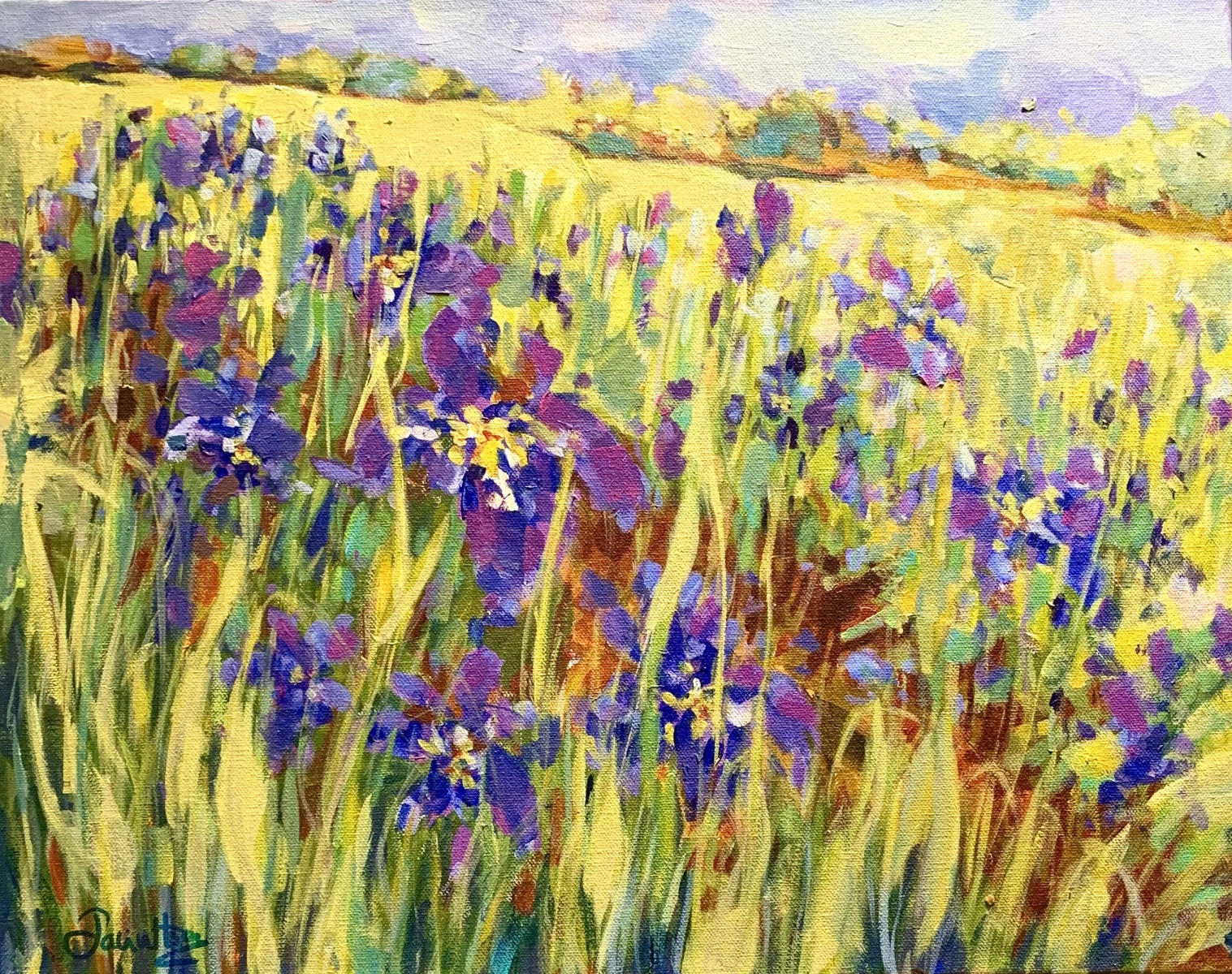 FIELDS OF IRIS