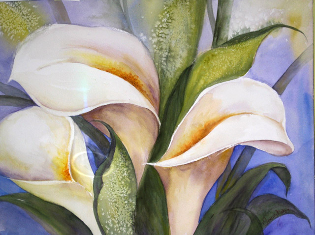 WHITE CALLAS - SOLD